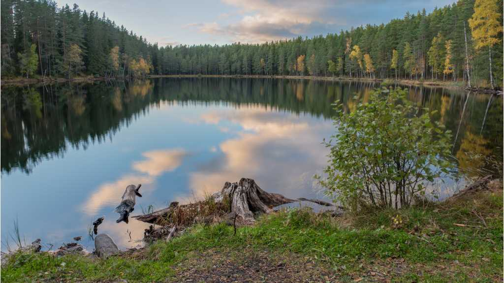 A beautiful lake surrounded by trees